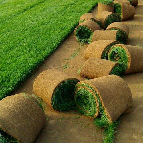 辽阳人造草坪