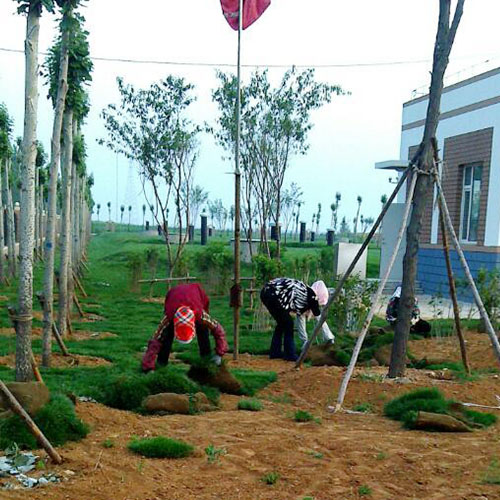 沈阳草坪种植基地