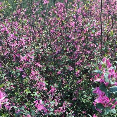 春季花灌木