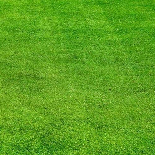 沈阳草坪怎么卖