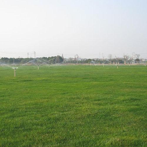 辽阳草坪养护