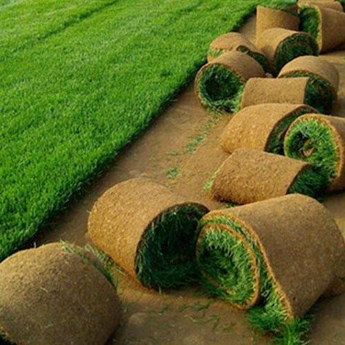 草坪种植哪家好